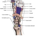 reflexoterapia (6)